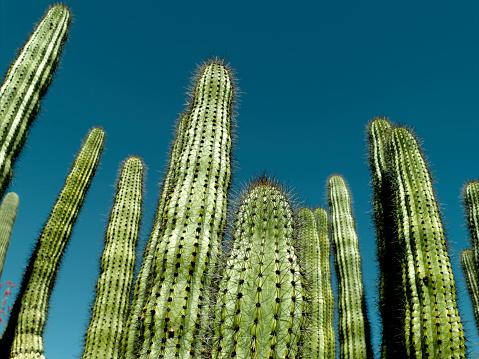 Sedona「Cactus」:スマホ壁紙(4)