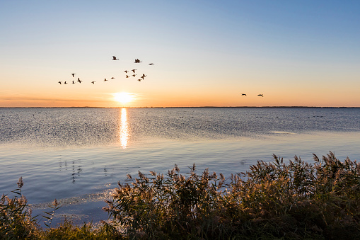 Flock Of Birds「Germany, Mecklenburg-West Pomerania, Baltic Sea, Ruegen Island, Schaprode, Schaproder Bodden, Cranes (Grus grus) flying above sea at sunset」:スマホ壁紙(11)