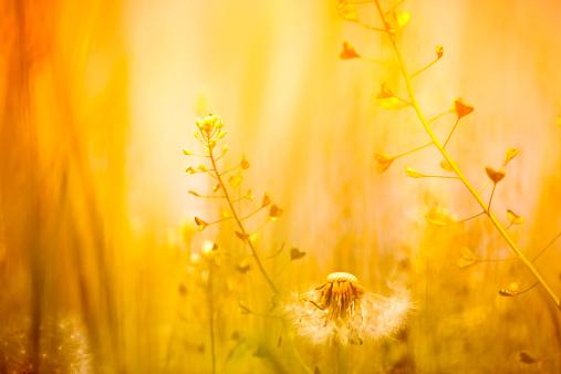 Wildflower「Wildflower Background」:スマホ壁紙(2)