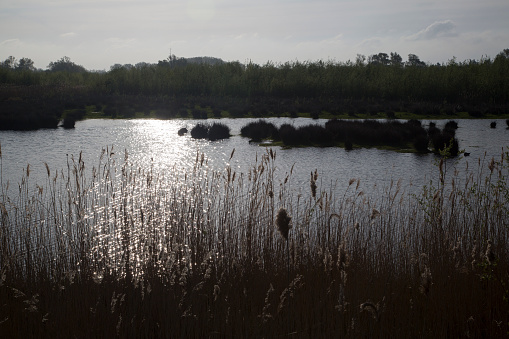 North Brabant「Backlit small lake in Biesbosch National Park, Netherlands.」:スマホ壁紙(5)