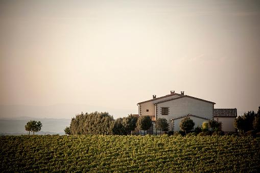 Agricultural Building「Vineyard and house in rural landscape」:スマホ壁紙(15)