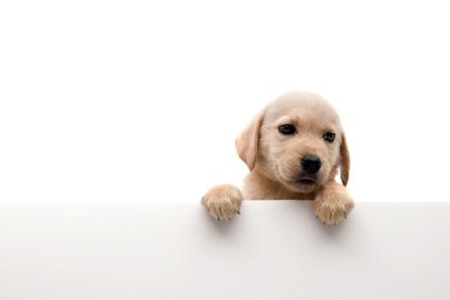 Puppy「little dog」:スマホ壁紙(3)