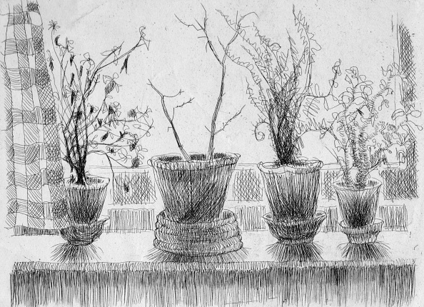 Etching「Dead Plants On A Windowsill」:写真・画像(12)[壁紙.com]