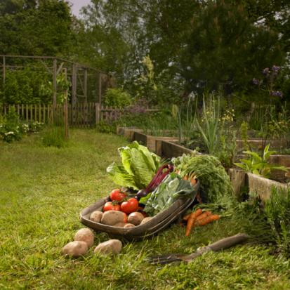 Vegetable Garden「Basket full of fresh vegetables in garden.」:スマホ壁紙(17)