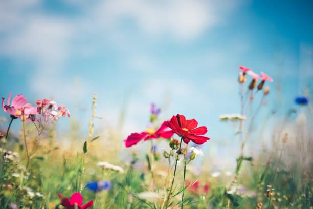 春の牧草地:スマホ壁紙(壁紙.com)