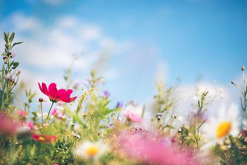 カラフル「春の牧草地」:スマホ壁紙(2)