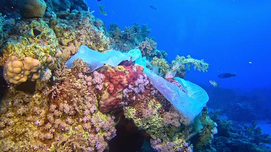Reef「Modern times symbol. Plastic bag on the coral reef」:スマホ壁紙(7)