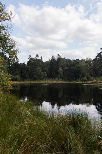 North Brabant「Forest pond」:スマホ壁紙(0)