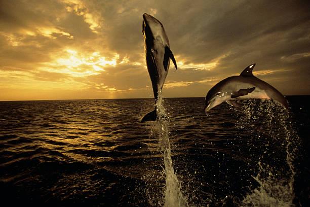 ワイルドイルカのまとめ:2006年04月11日(壁紙.com)