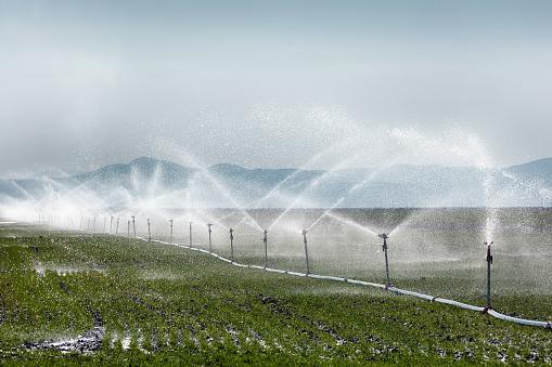 Planting「Irrigation sprinkler watering crops on fertile farm land」:スマホ壁紙(4)
