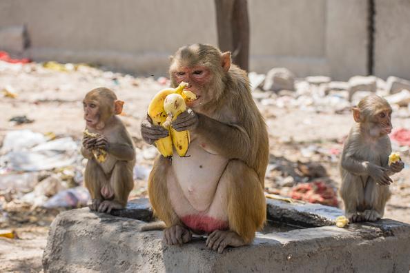 Animal「India Imposes Nationwide Lockdown To Contain The Coronavirus Pandemic」:写真・画像(3)[壁紙.com]