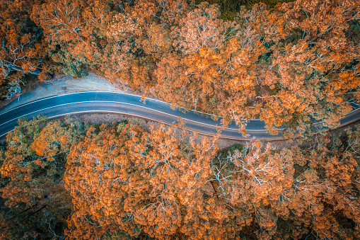 Bush Land「Road in the middle of forest in Australia」:スマホ壁紙(3)