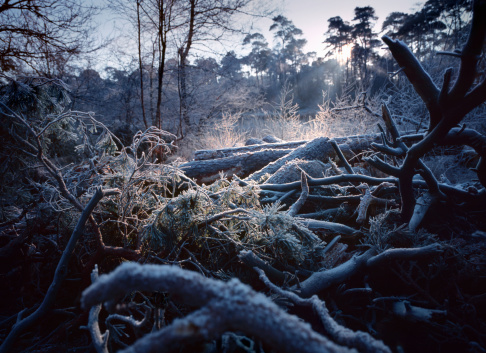 North Brabant「Forest floor covered with hoarfrost」:スマホ壁紙(12)