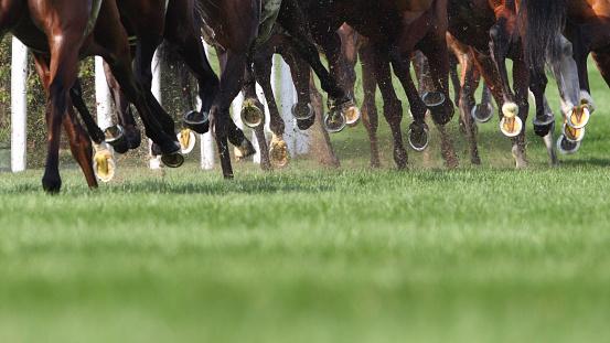 Racehorse「Horse Running」:スマホ壁紙(3)