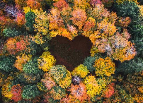Heart「Heart Shape In Autumn Forest」:スマホ壁紙(19)