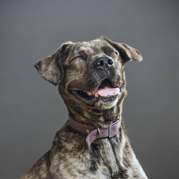 Dog with human expression:スマホ壁紙(壁紙.com)