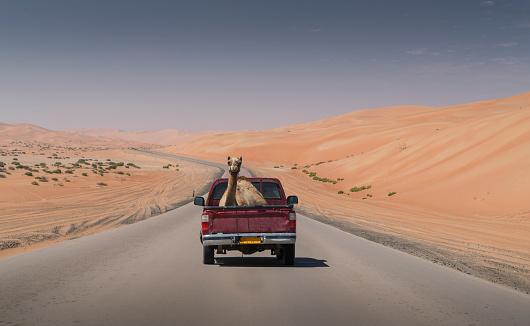Bizarre「Camel on a pickup truck」:スマホ壁紙(9)
