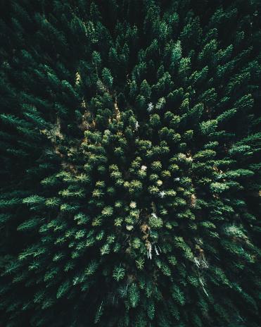 環境「ツリーのフォレスト パインズ空撮」:スマホ壁紙(6)