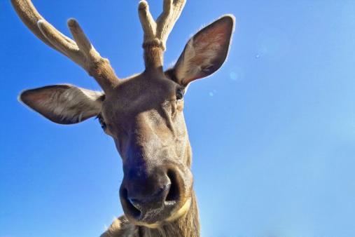 reindeer「Rudy the Reindeer」:スマホ壁紙(17)
