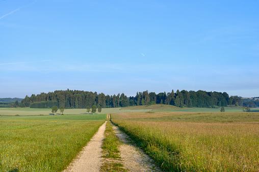 Uncultivated「Dirt road in meadow, summertime. Swabian Alb, Swabian Jura, Baden-Württemberg, Germany.」:スマホ壁紙(1)