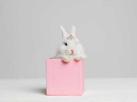 Crown - Headwear「White bunny rabbit wearing tiara sitting in pink box, studio shot」:スマホ壁紙(4)