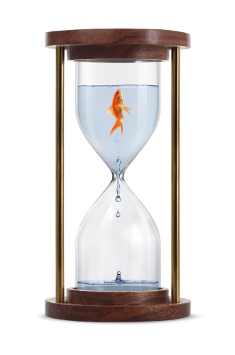Clock「Goldfish in Hourglass」:スマホ壁紙(11)