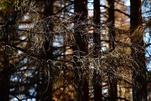 Plant Bark「As Summer Temperatures Rise Bark Beetle Infestations Intensify」:写真・画像(16)[壁紙.com]