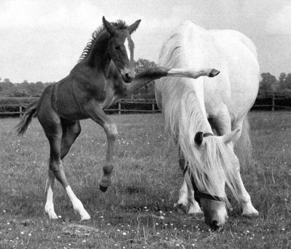 Horse「Tosca And Foal」:写真・画像(14)[壁紙.com]