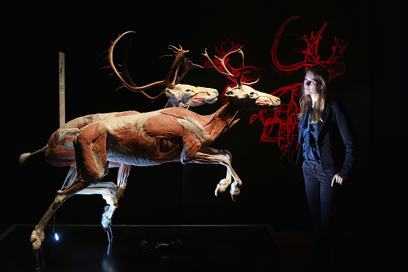 Mammal「The Natural History Museum Launch Their Latest Exhibition 'Animal Inside Out'」:写真・画像(5)[壁紙.com]