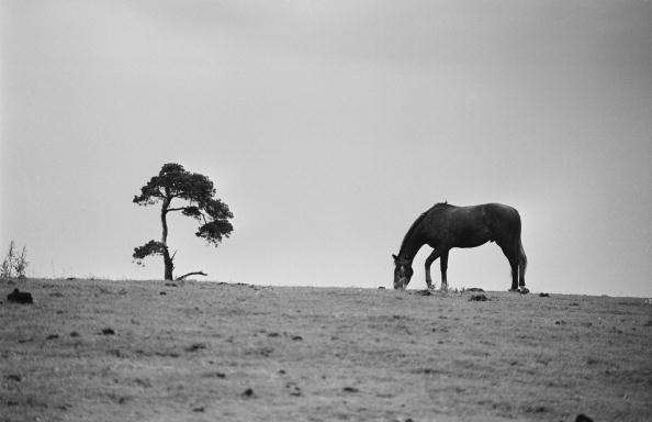 Horse「Horse On A Hill」:写真・画像(6)[壁紙.com]