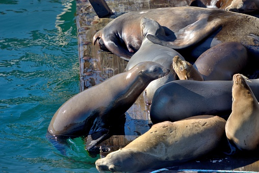 City of Monterey - California「Monterey, sea lions enjoy the pontoons at the foot of the piers.」:スマホ壁紙(12)