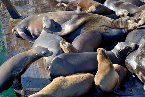 City of Monterey - California「Monterey, sea lions enjoy the pontoons at the foot of the piers.」:スマホ壁紙(17)