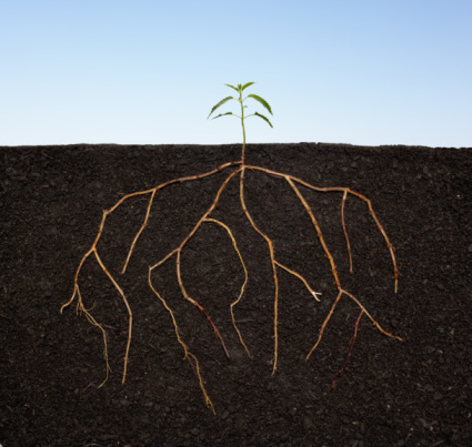 Growth「Plant seedling growing with extensive roots.」:スマホ壁紙(4)