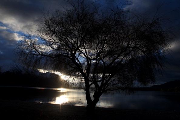 Tree「Scenes Of Otago」:写真・画像(5)[壁紙.com]