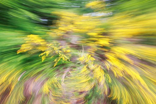 Spinning「Motion blur and spin, yellow flowering plant」:スマホ壁紙(11)
