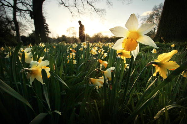Sun「The Royal Botanic Gardens At Kew Celebrate Their 250th Anniversary」:写真・画像(13)[壁紙.com]