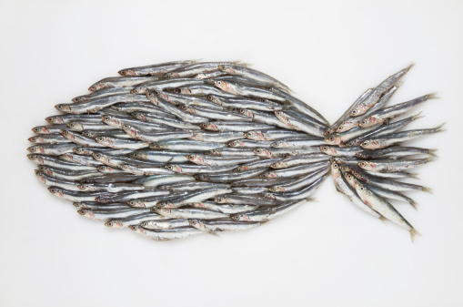 質感「Big fish formed of anchovies (Engraulidae) on white ground」:スマホ壁紙(2)