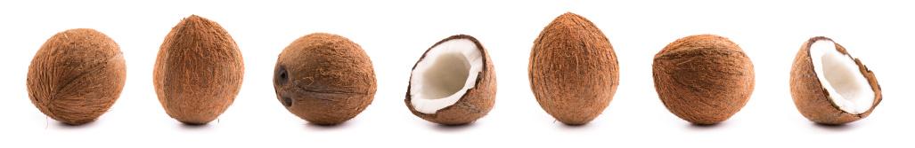Nut - Food「coconuts」:スマホ壁紙(9)