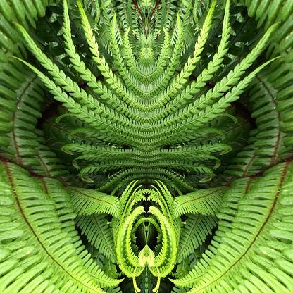 Intricacy「Fern Mandala」:スマホ壁紙(13)