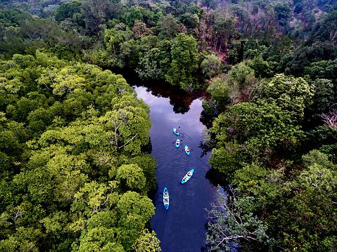 Tropical Tree「River swamp on Kho Rong island, Cambodia」:スマホ壁紙(3)