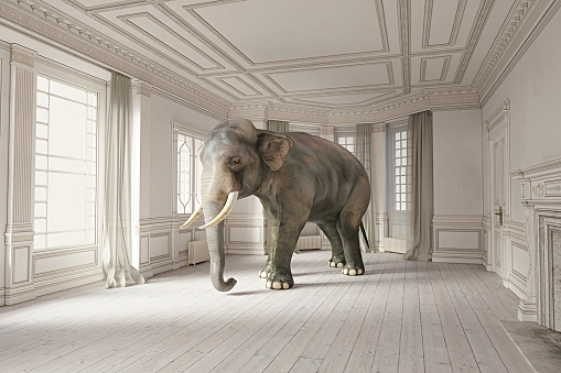 Contrasts「Elephant in the room series.」:スマホ壁紙(6)