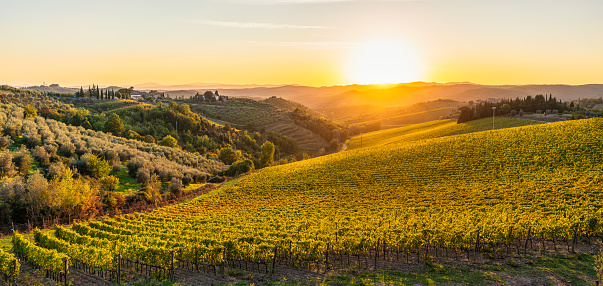 Vine - Plant「Autumn sunset in the hills of Tuscany」:スマホ壁紙(16)
