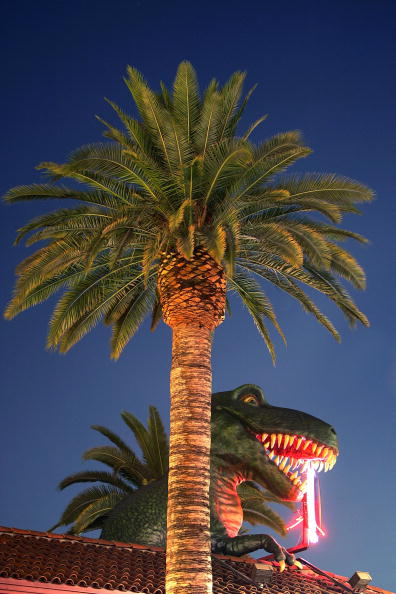 Tree「LAs Signature Palm Trees Are Disappearing」:写真・画像(5)[壁紙.com]