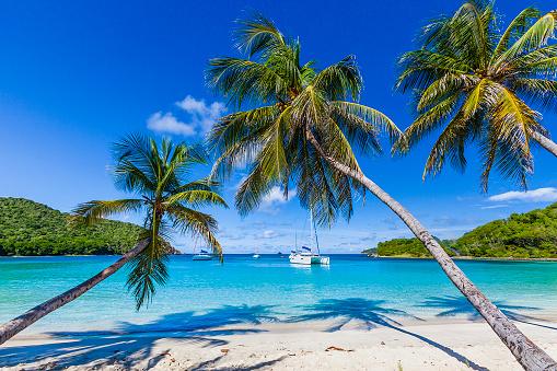 Salt Whistle Bay「Palm trees line sandy coastline of Salt Whistle Bay, Mayreau」:スマホ壁紙(0)