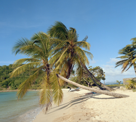 Salt Whistle Bay「Palm trees on beach growing out over water」:スマホ壁紙(15)