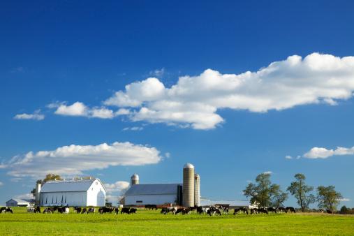 Females「Lancaster County Farm」:スマホ壁紙(9)