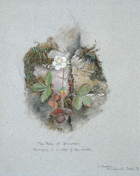 Wildflower「A Wild Strawberry Plant」:写真・画像(7)[壁紙.com]