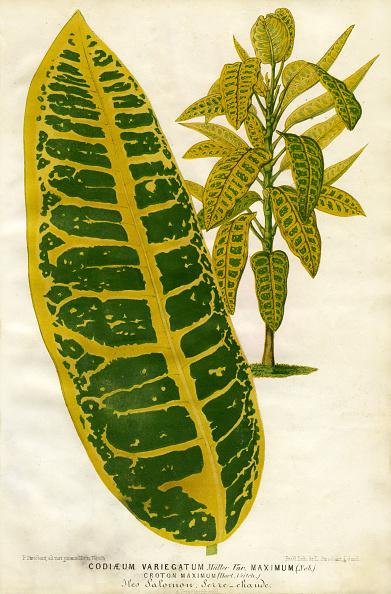Greenhouse「Croton」:写真・画像(6)[壁紙.com]
