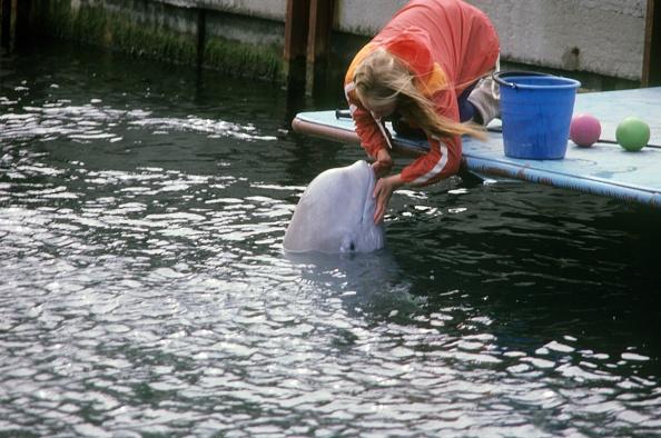 Mammal「Ukrainians war dolphins」:写真・画像(0)[壁紙.com]
