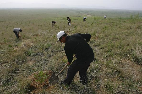 Tree「People Plant Trees to Control The Sandstorm Source」:写真・画像(9)[壁紙.com]